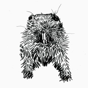 From a collection of drawings of taxidermy animals, Jason Locker, Los Angeles, CA