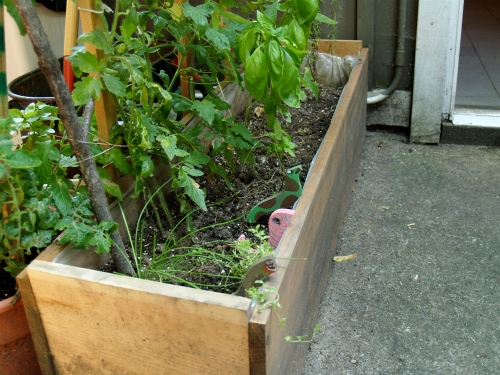A planter box garden in the back yard.