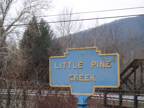 Little Pine.  TS